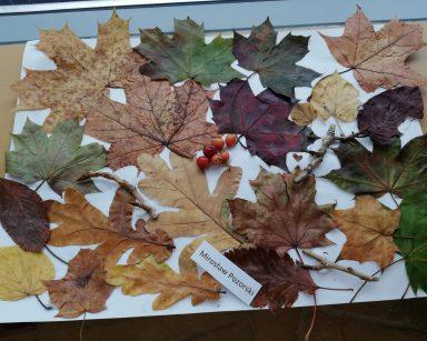 Warsztaty plastyczne w ogrodzie zimowym 28.10.2020