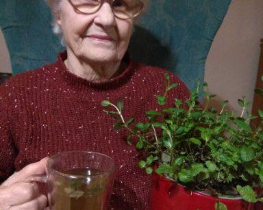 Seniorka – uczestniczka DDP siedzi w fotelu i się uśmiecha. W jednej ręce trzyma krzaczek mięty, a w drugiej kubek z zaparzoną herbatą
