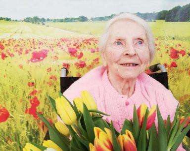 Seniorka siedzi i trzyma w rękach bukiet żółtych, pomarańczowych, białych oraz różowych tulipanów. Seniorka siedzi na tle fototapety przedstawiającej słoneczny dzień na polu z jasnozielonym zbożem i czerwonymi makami