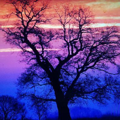 Krajobraz. Zachód słońca. Niebo w odcieniach pomarańczowego, różowego i niebieskiego. Na pierwszym planie wysokie drzewo.