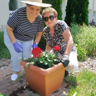 Patio przed budynkiem. Seniorka i kierowniczka Mariola Ludwicka sadzą w donicy czerwone pelargonie.