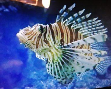 Podwodny krajobraz. Egzotyczna ryba w biało-brązowe prążki.