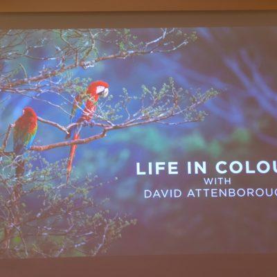 """Kadr z programu """"David Attenborough: Życie w kolorze"""". Na drzewie siedzą dwie kolorowe papugi."""